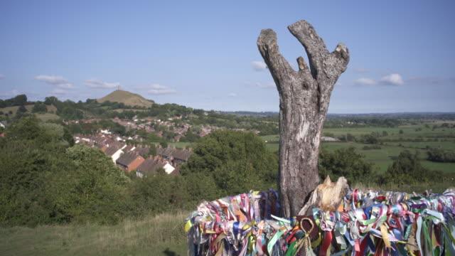 glastonbury holy thorn, wearyall hill, glastonbury, somerset, uk - glastonbury tor stock videos & royalty-free footage