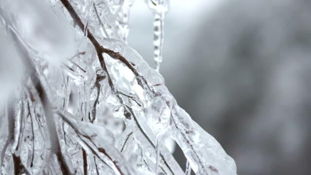 vídeos y material grabado en eventos de stock de glaseado de hielo en el twigs - rama parte de planta