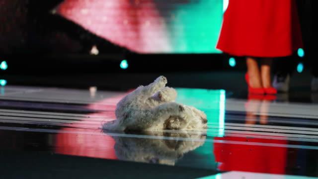 vídeos y material grabado en eventos de stock de glenn close's dog pip seen onstage during the 2019 film independent spirit awards on february 23, 2019 in santa monica, california. - glenn close