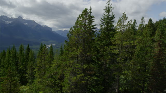 Gliding down through the trees of the Canadian Rockies