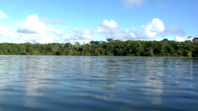 Gliding Over the Amazon
