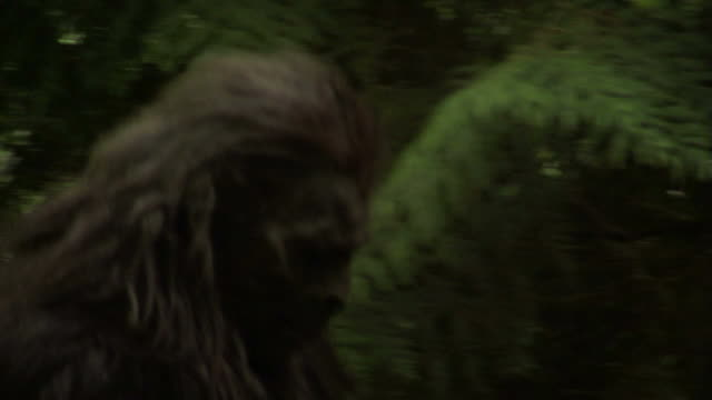 Glimpse of Sasquatch