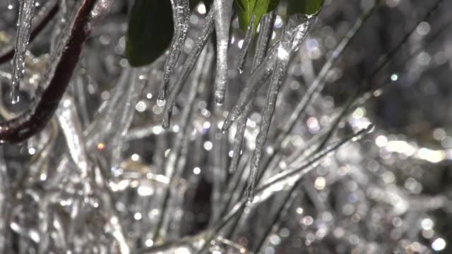 vídeos de stock, filmes e b-roll de of glittering icicles dripping water. - pingente de gelo