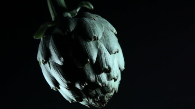 globe artichoke, emerging from darkness. - chiaroscuro stock videos and b-roll footage