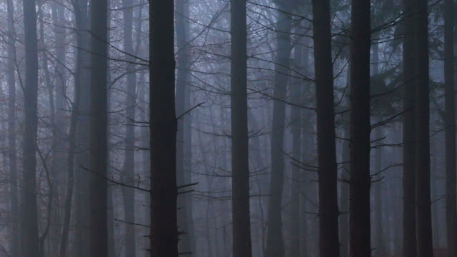 gloomy mood in coniferous forest - dark stock videos & royalty-free footage