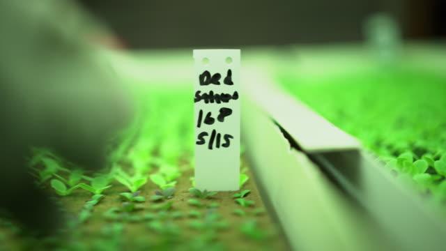 ecu gloved hand taking care of seedlings under led lights - 生物学点の映像素材/bロール
