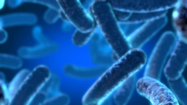 glowing bacterias - bacterium stock videos & royalty-free footage