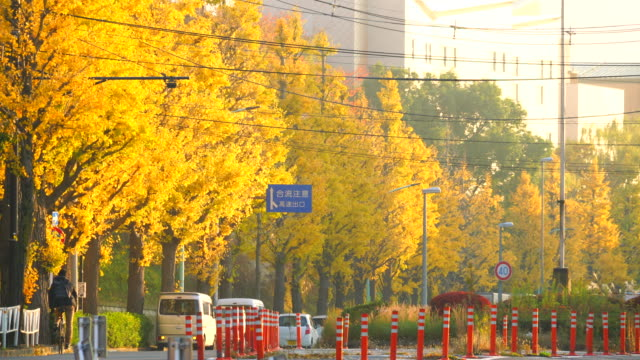 glowing rows of autumn leaves ginkgo trees by sunset during the evening rush hours at sangubashi shibuya tokyo japan on november 29 2017. - ginkgobaum stock-videos und b-roll-filmmaterial
