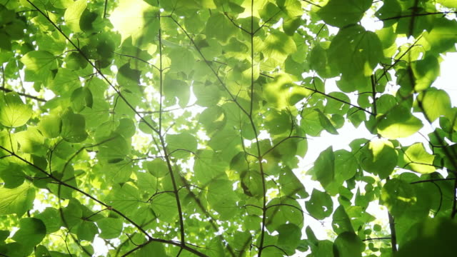 glowing sunshine through canopy - wind stock videos & royalty-free footage