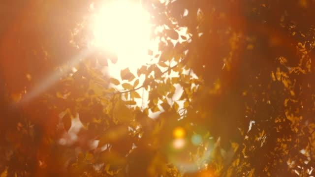 Glowing sunshine through Leaves