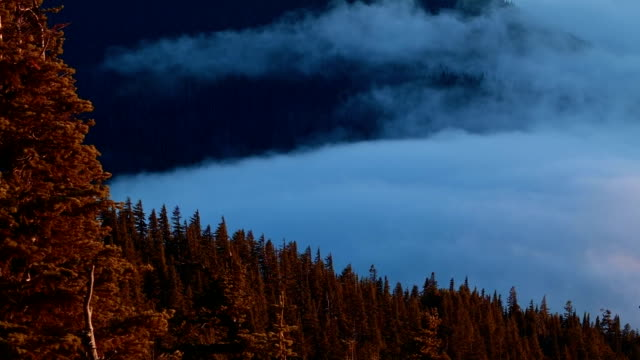 glowing trees sunset and fog inversion mt. hood oregon cascades 8 - mt hood stock videos & royalty-free footage