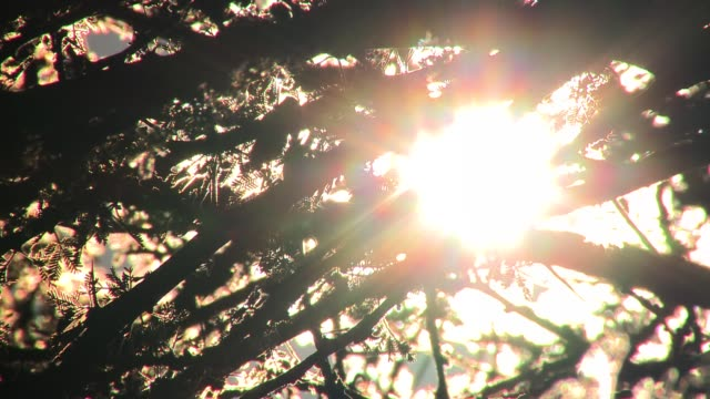 a glowing white sun silhouettes the branches of a tree. available in hd. - back lit stock videos & royalty-free footage