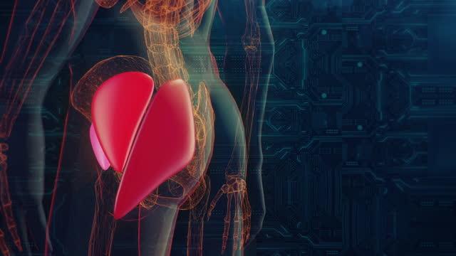 臀筋 - 骨盤点の映像素材/bロール