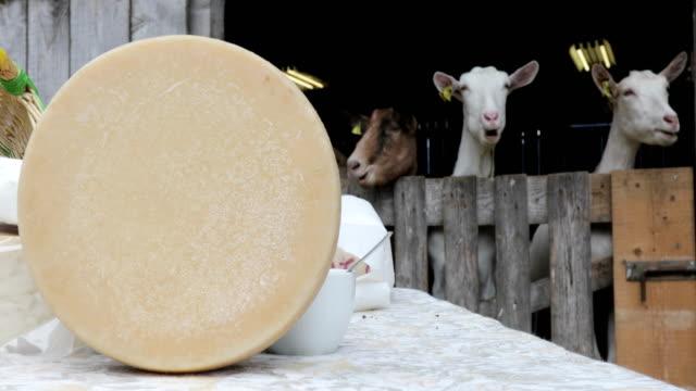 ヤギのチーズホイールを背景にヤギ - シェーブルチーズ点の映像素材/bロール