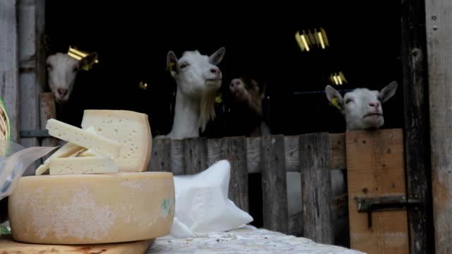 ヤギのチーズを背景に - シェーブルチーズ点の映像素材/bロール