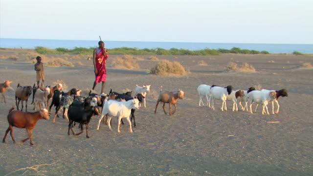 MS PAN Goat herder near Lake Turkana / Nackhukui, Turkana, Kenya