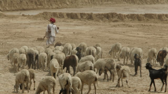 WS Goat herders with herd / Agra, India