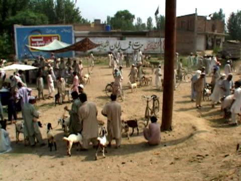 ws pan goat market , kabul city, kabul, afghanistan - kabul stock-videos und b-roll-filmmaterial
