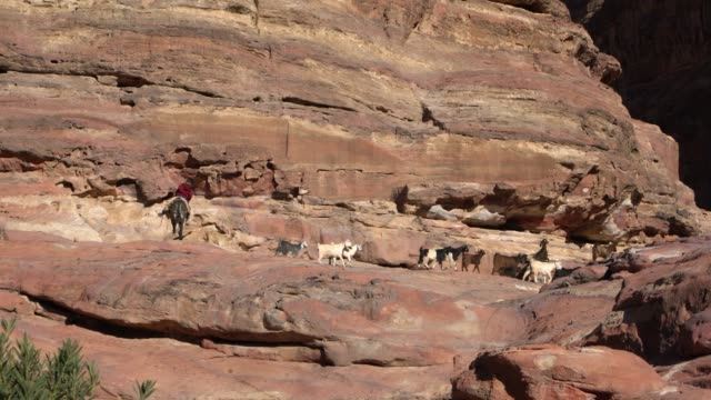 a goatherd herds goats among the rocks in petra, jordan - unesco stock videos & royalty-free footage