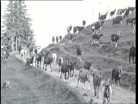 1937 B/W MONTAGE Goatherd in Alps / Tyrol, Austria