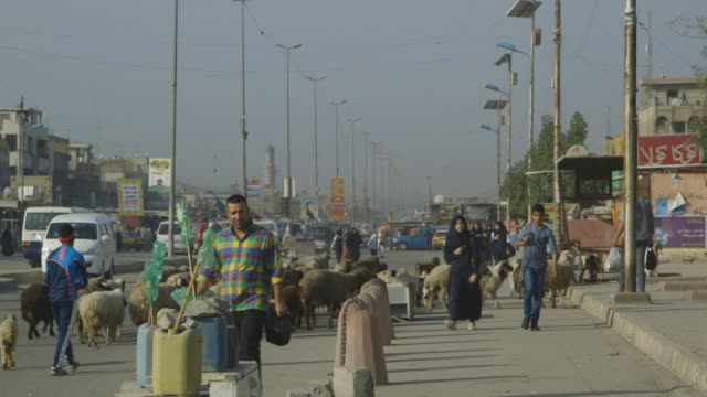 goats and pedestrians on baghdad street, wide shot - baghdad stock videos & royalty-free footage