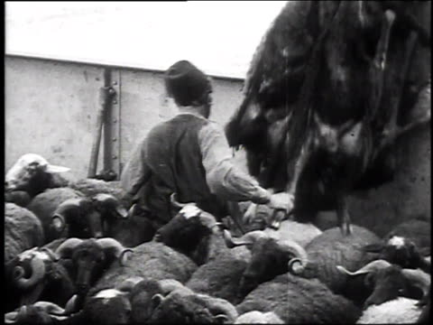 1930 montage goats being loaded aboard ship from barges / trabzon, turkey - turkey middle east stock videos & royalty-free footage