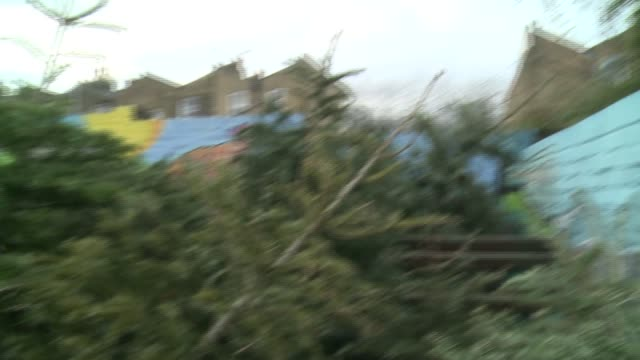 vídeos y material grabado en eventos de stock de goats eating unwanted christmas trees england london kentish town kentish town city farm ext christmas trees piled up at farm / various of goats... - kentish town