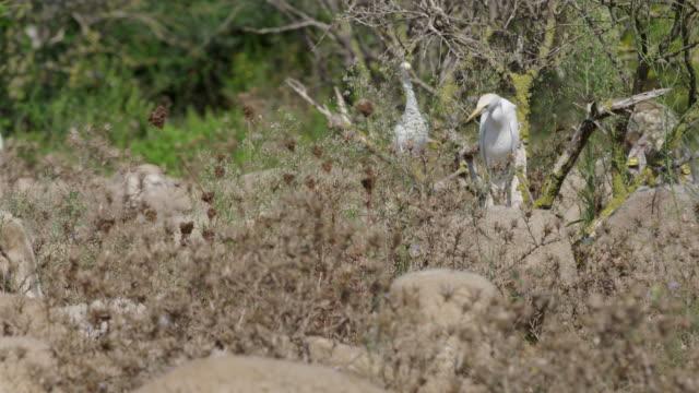 vidéos et rushes de goats eating - groupe de mammifères marins