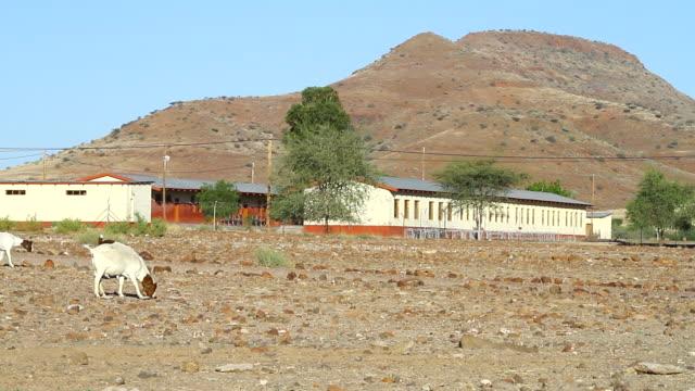 vídeos y material grabado en eventos de stock de ws goats grazing in front of buildings and mountain / bergsig, kunene, namibia - wiese