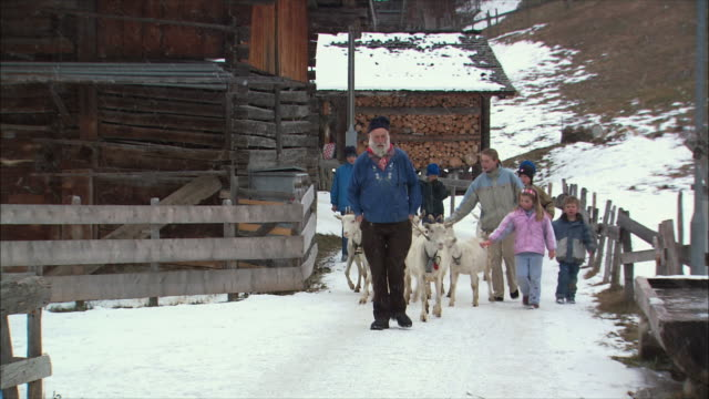 ws zo goats in streets of snowy swiss village / gimmelwald, berner oberland, switzerland - gimmelwald stock videos & royalty-free footage