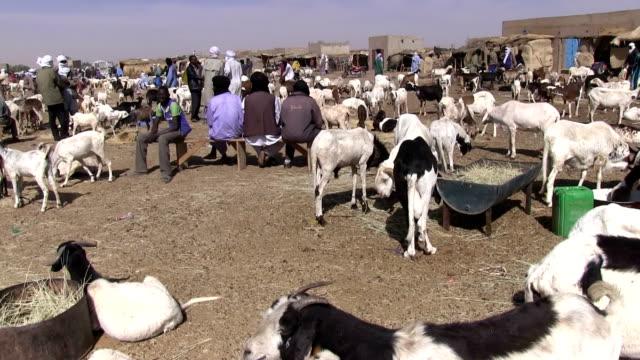 Goats market and Tuareg Niger Agadez