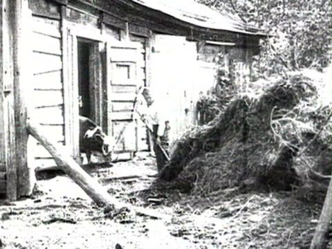 ms goats near cowshed poultry cow drinking in bucket audio/ russia - 1925年点の映像素材/bロール