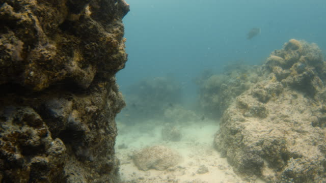 going behind a huge coral reef - tauchgerät stock-videos und b-roll-filmmaterial