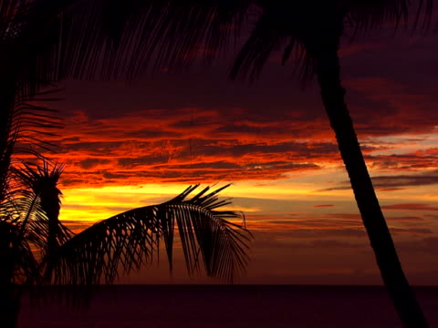gold and purple clouds with palms - blattfiedern stock-videos und b-roll-filmmaterial