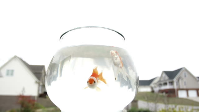 gold fish and house - fishbowl stock videos and b-roll footage