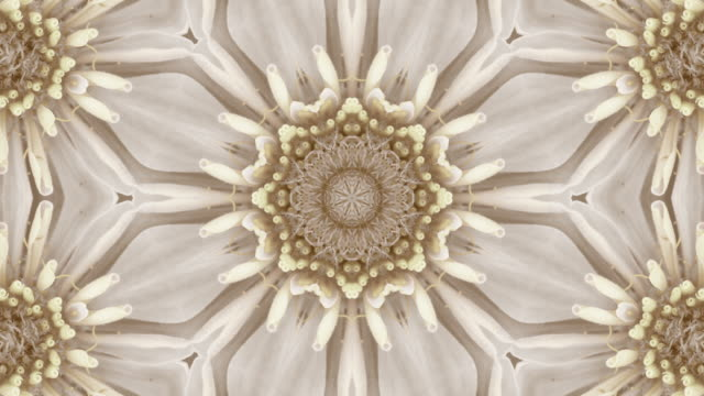 gold textured seamless vintage floral pattern - mandala stock videos & royalty-free footage