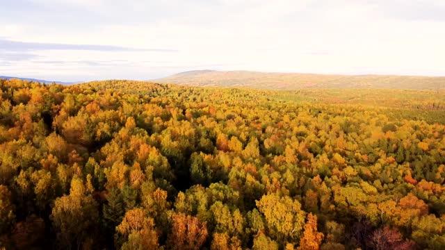 가을 산 드론샷