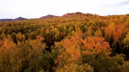 Golden aerial drone flight over the autumn forest in the mountains at sunset Ural Russia