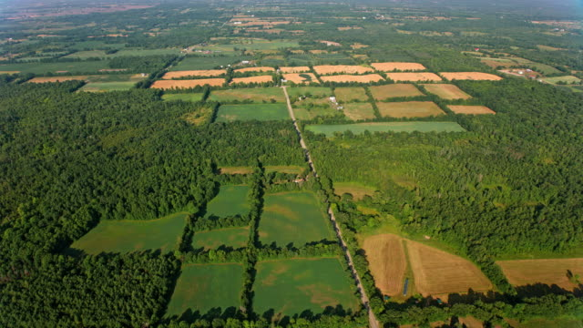 aerial golden and green fields in ontario on a sunny day - ontario canada stock videos & royalty-free footage