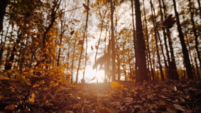 ms super slow motion gyllene höstblad faller i solig, lugn skog - höstlöv bildbanksvideor och videomaterial från bakom kulisserna