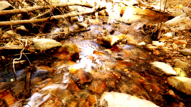 golden autumn stream - running water stock videos & royalty-free footage