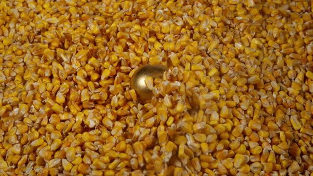 vídeos de stock e filmes b-roll de golden chicken egg and corn, zea mays, slow motion 4k - amontoar