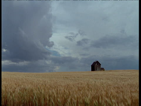 vídeos de stock, filmes e b-roll de golden crop of wheat gently sways in front of a derelict wooden house on prairie, storm clouds gathering in sky, usa - memórias