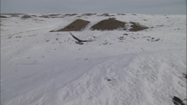 golden eagle (aquila chrysaetos) flies over snowy steppe, jiakuerte, china - 自然保護区点の映像素材/bロール
