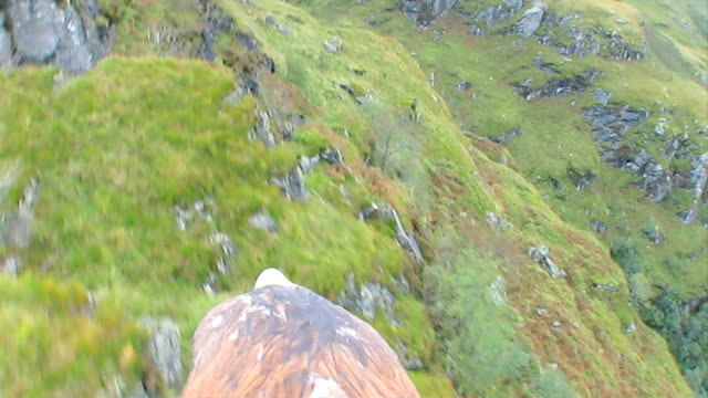 golden eagle in flight - 猛禽点の映像素材/bロール