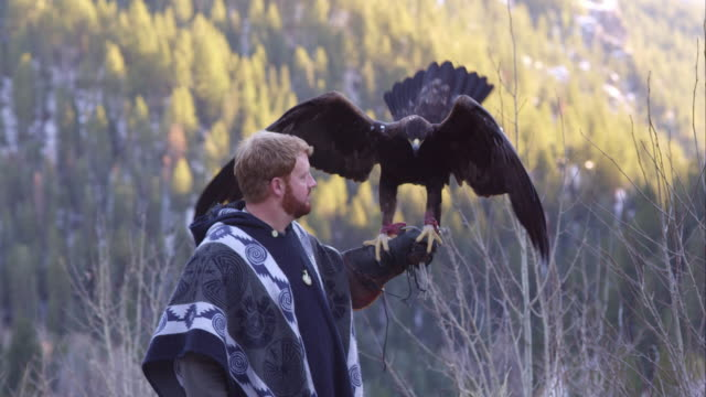 Golden eagle perched on falconer's arm.