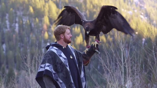 vidéos et rushes de golden eagle perched on falconer's glove. - aigle