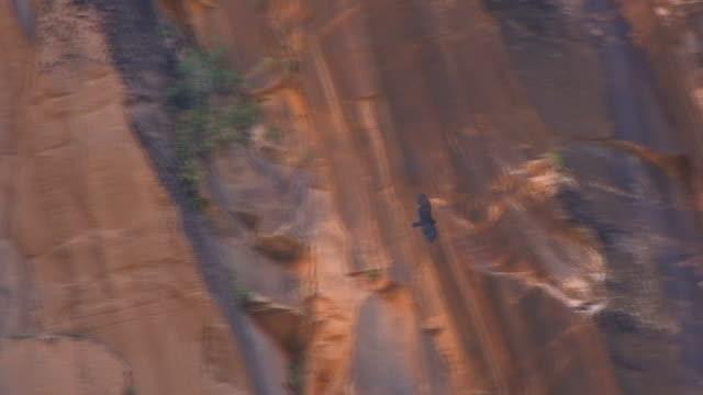 golden eagle alti parte 3 - cliff video stock e b–roll