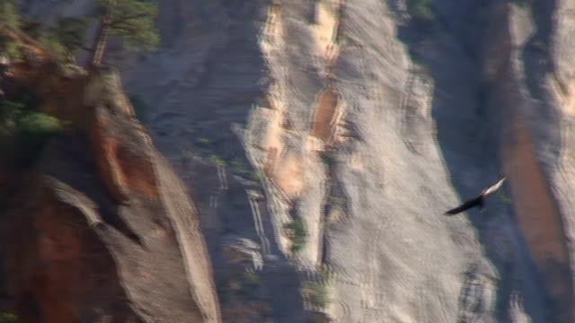 golden eagle alti parte 4 - cliff video stock e b–roll