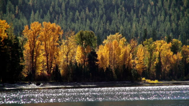 golden fall colored trees along mountain lake shoreline with sunlight reflecting off water. - seeufer stock-videos und b-roll-filmmaterial